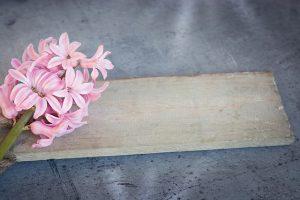 hyacinth-1403166_640