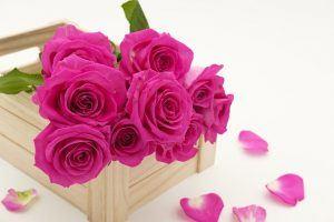 משלוחי פרחים באינטרנט