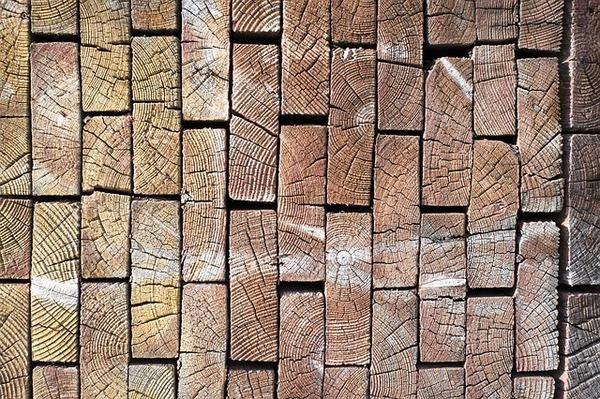 קורס בניה בעץ
