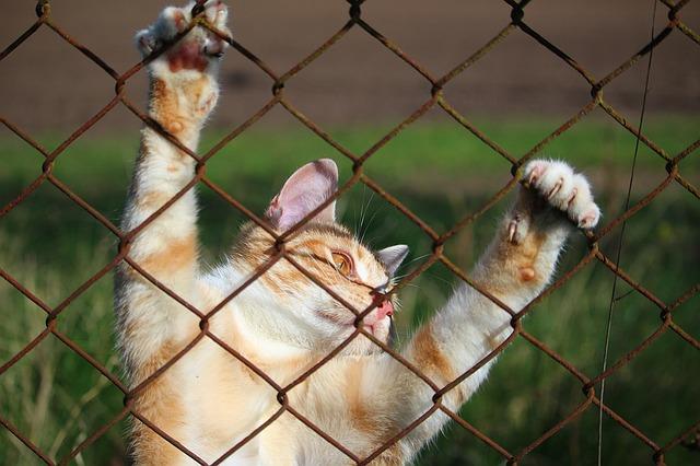 איך מגדלים חתול מאושר