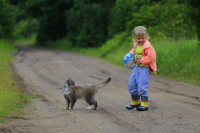 משחקים לחתולים