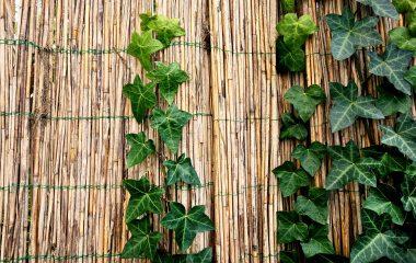 גדר במבוק – איך לתחזק אותה לאורך זמן?