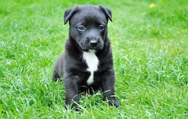 מאיזה גיל עושים אילוף כלבים?