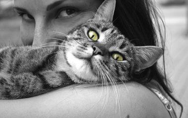 טיפול ואוכל לחתולים מבוגרים
