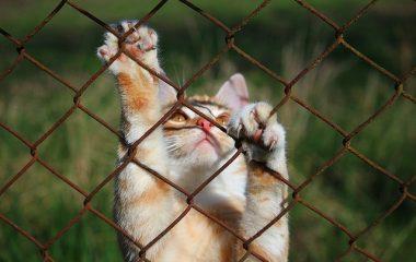 היתרונות של קניית מתקן גירוד לחתול שלך