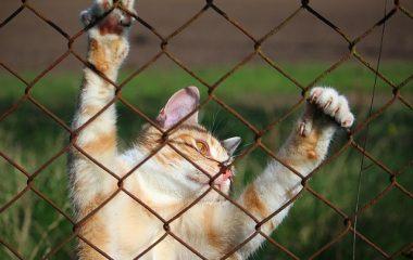 איך מגדלים חתול מאושר? כי חתולים הם הכי הכי