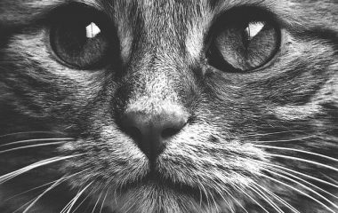 חתולים במצרים העתיקה