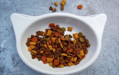 גולדן פט מזון חתולים בריאים וחזקים