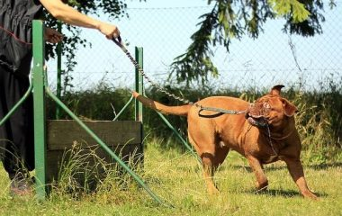איך אילוף כלבים משפיע על הקשר עם הבעלים?