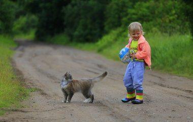 סוגי משחקים לחתולים להתפתחות ולהנאה