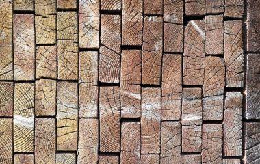 איך לבחור קורס בניה בעץ