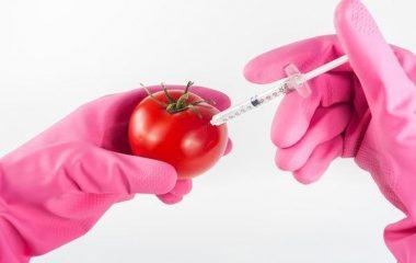 בדיקות מזון במעבדה מקצועית