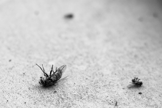 הדברת יתושים ירוקה